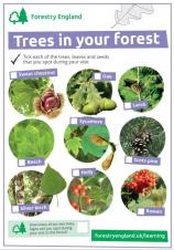 Identify trees with the Woodland Trust free Tree ID app